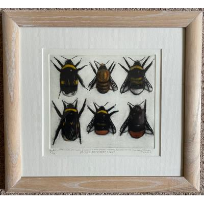 British Bumblebee Queens