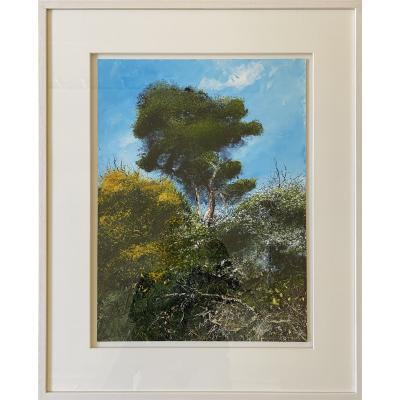 Old Pine Tree Surrounded By Gorse And Hawthorne